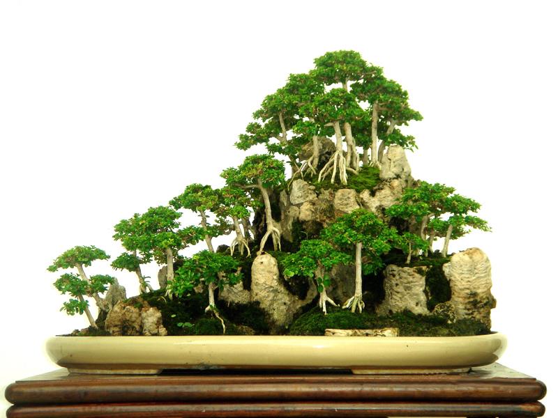 Bonsai - formowana grupa roślin
