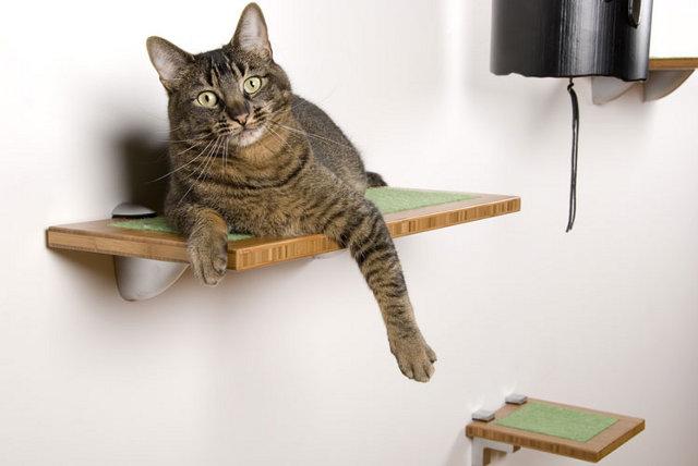półka dla kota - fot. squarecathabitat.com