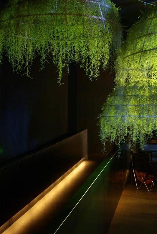 Roślinna kompozycja - Rainforest od Boffi