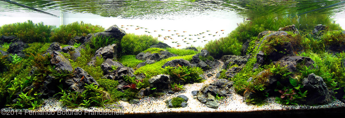 Aquascape - akwarium roślinne