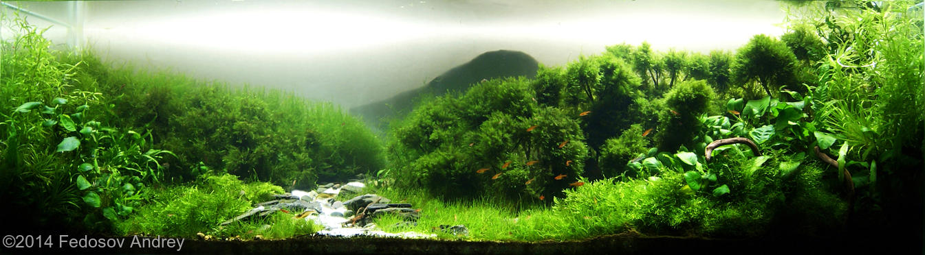 Aquascaping Contest